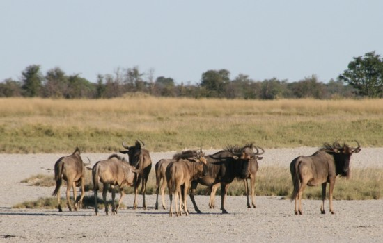 Makgadikgadi and Nxai Pan National Park